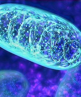 Mitochondria2_edited.jpg