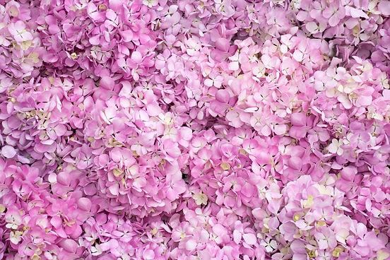 Jolie-Rosé-Hyd-02.jpg
