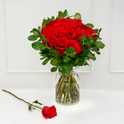 Rose red 6