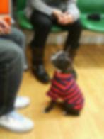 お座りするパグ犬