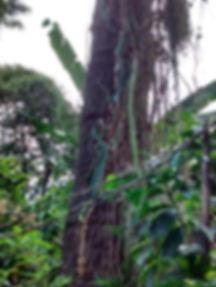 tree in tree.jpg