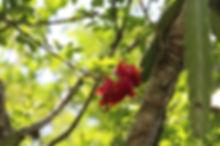 red fruit2.JPG
