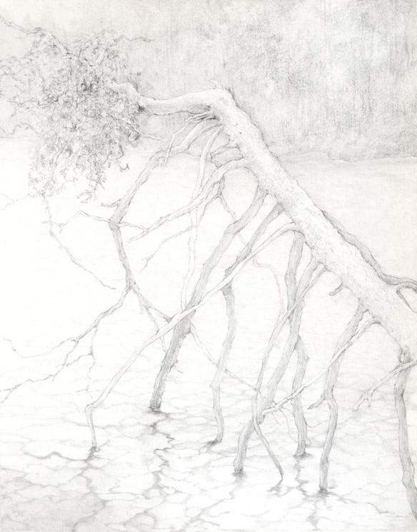 Walking tree on the lake