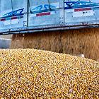 grainstransport.jpg