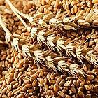 Wheat-Grains-500x288.jpg