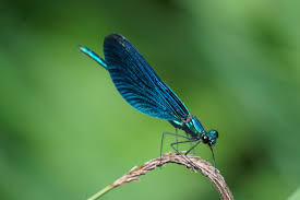 Dragon-fly Moment