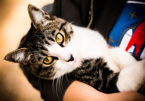 Salstrand kitty