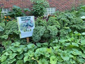 Kale+0-5-300x225.jpg