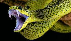 """""""The Snake Bitten Church!"""" 5-23-21"""