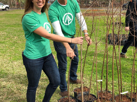 Tree Giveaway at Wolfe Park
