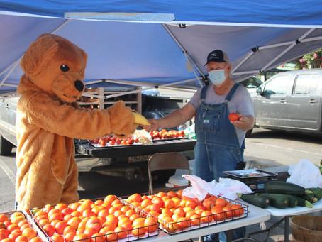 Farmer's Market to Return June 5