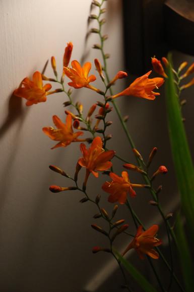 Flowers from the Groombridge garden