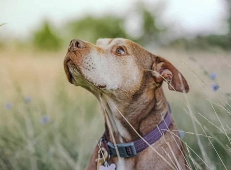 The importance of routine for your dog