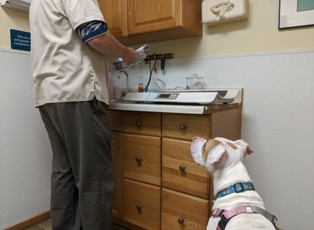 Managing Vet Visits with a Fearful Dog