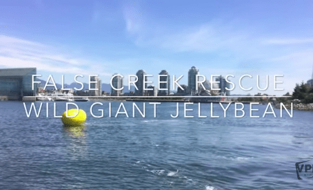 Jellybeans, Meth Labs, and Whales – OH MY! The Marine Unit Sees It All!