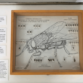 Forensic Entomology in Canada: How Bugs Solve Crime