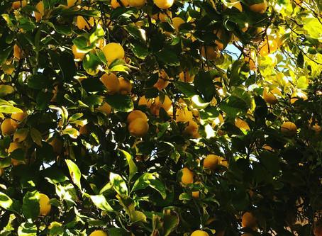 レモンの凄さ🍋