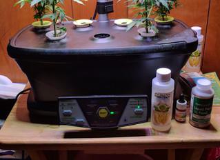 My Aerogarden Cannabis Grow.