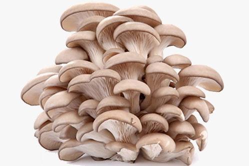 Cogumelo Shimeji Orgânico