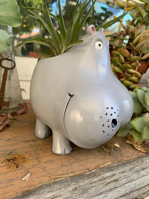 """Hippo - 5"""""""