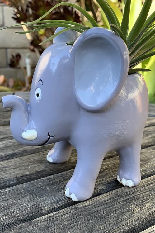 "Elephant - 5"""