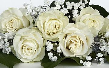 rosa-bianca_pixabay.jpg