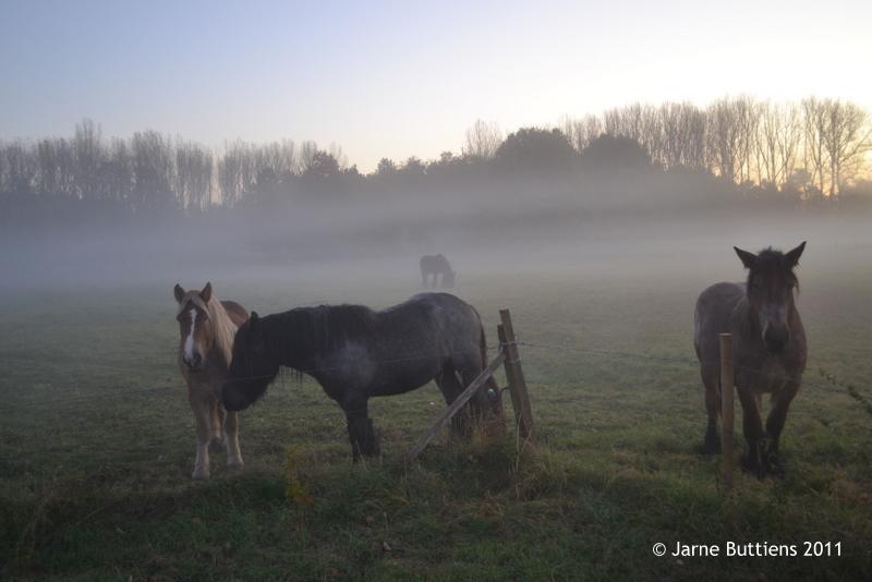JB-okt2011-19-Paarden in mist