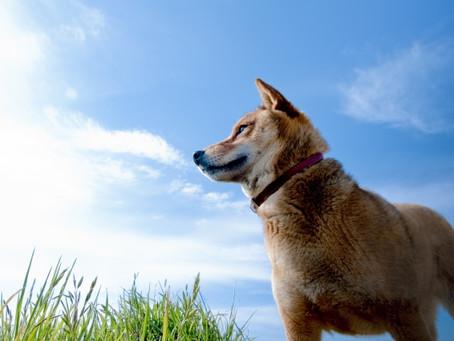 迷子ペットの探し方 犬は追いかけっこ、猫はかくれんぼ