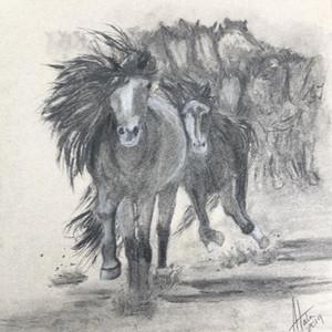Kevin's Horses