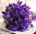 mazzolino di violette.jpg