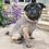 Thumbnail: Alqo Wasi Hundepullover