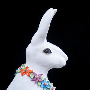 Hare.1.JPG