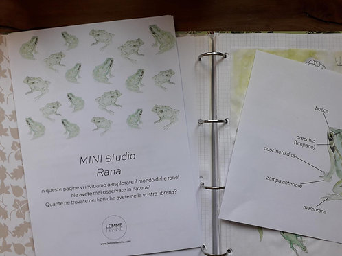 Rana / mini studio