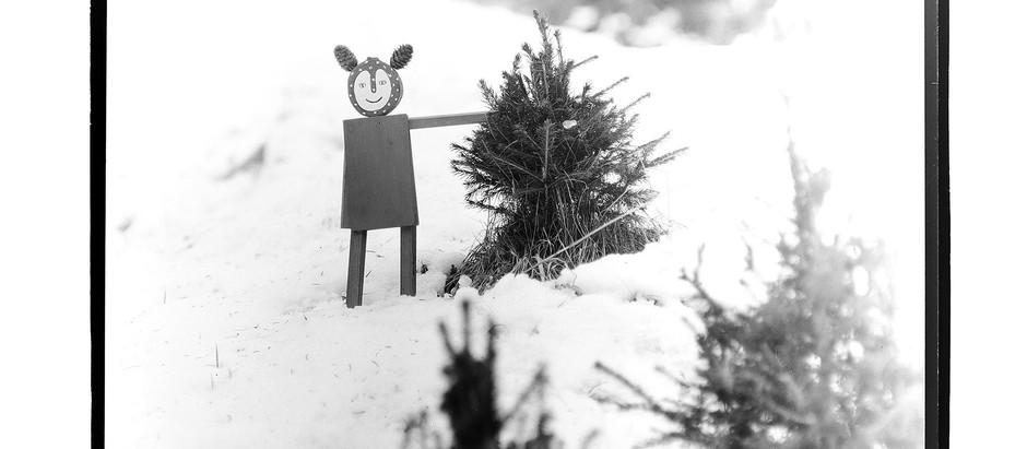 Latenze e rivelazioni / Inverno