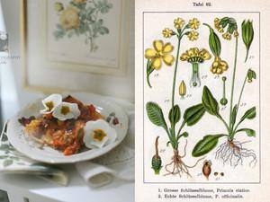 Primula Vegi - Lasagne und einen Schlüsselblumen - Frühlingssalat mit Honigdressing