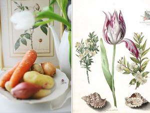 Ein Gratin im Tulpenfieber