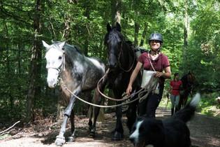 Wanderritt im ODenwald mit Hund und Handpferd