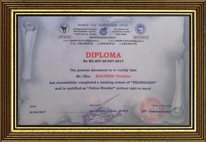 Диплом фелинолога