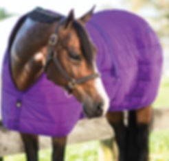 horse tack 3.jpg