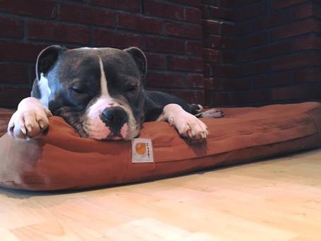 Carhartt Workwear Dog Bed.