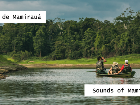 Let the Amazon flood your living room: Sounds of Mamirauá