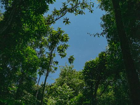 🇧🇷 Vida selvagem na Reserva Mamirauá: a experiência do viajante