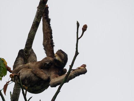 🇧🇷 12 imagens que mostram que a Reserva Mamirauá é o destino obrigatório dos fotógrafos na Amazôni
