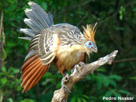 🇧🇷 Quem foi Henry Bates – e porque ele é importante para a Amazônia