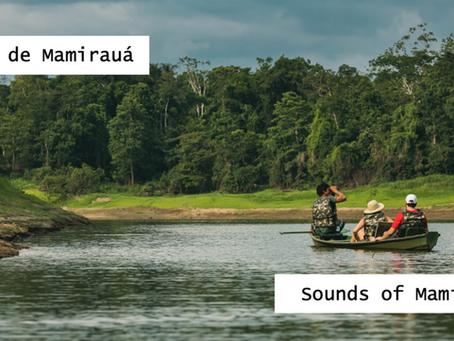 Deixe a Amazônia inundar sua casa: Sons de Mamirauá