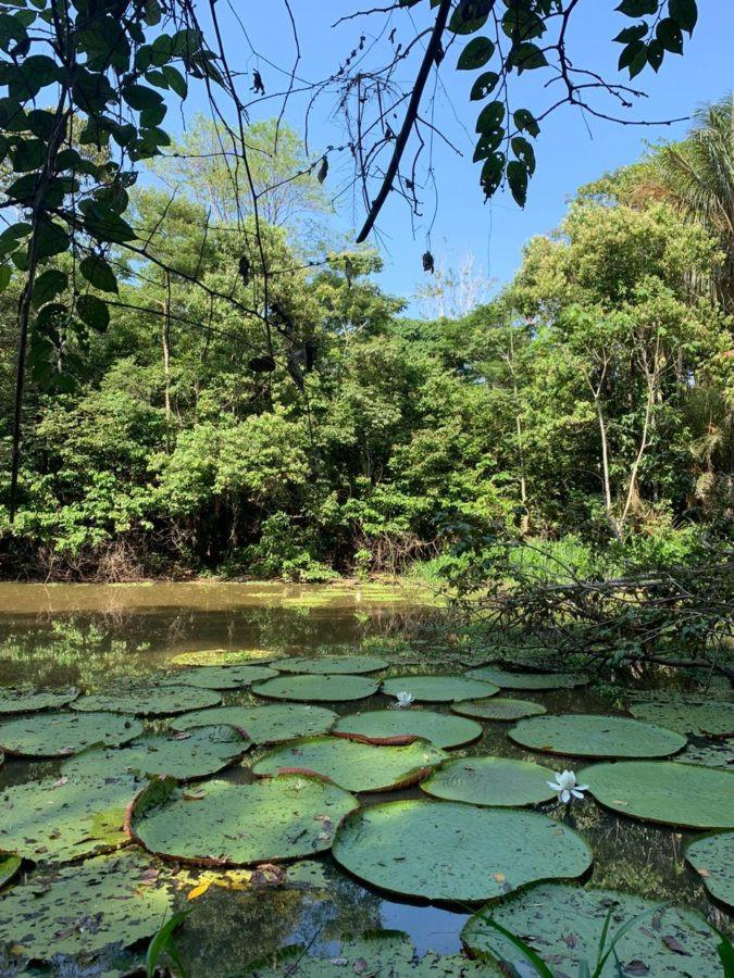 Uakari Lodge | Mamirauá Reserve | Amazon Brazil