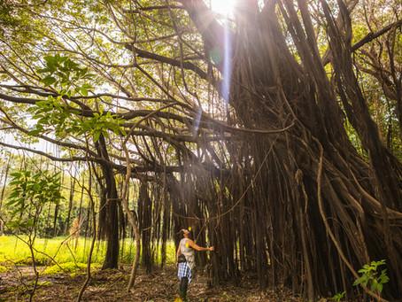 """🇧🇷 Porque o novo """"Nas Pegadas de Henry Bates"""" da Uakari Lodge é uma maneira totalmente nova de vis"""