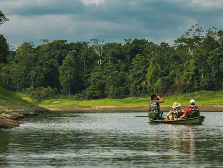 🇬🇧 Wildlife at Mamirauá Reserve: a guest's experience