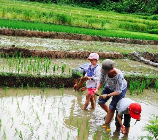 luangprabang, kamu lodge, cultivate rice, activities with kids, family trip, travel with family, workshop with teenagers, Laos with kids, rice fields, countryside, laotian village