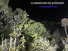 Iluminación de bosques